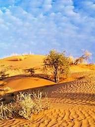 Пустыня Калахари (фото с сайта www.computerra.ru)