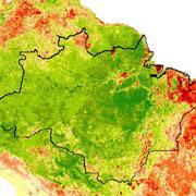 Оброблений супутниковий знімок лісів Амазонки в сухий сезон. Зелений цвіт відповідає інтенсивному зростанню лісів, червоний - зів'яненню (ілюстрація Terrestrial Biophysics and Remote Sensing Lab, University of Arizona)