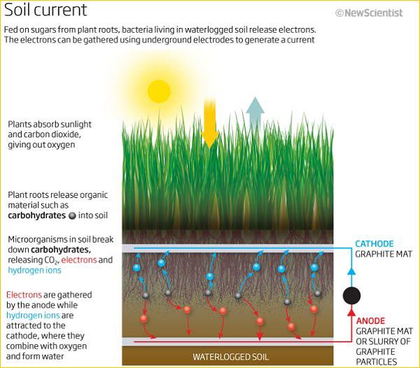 Устройство бактериального топливного элемента, питающегося от микроорганизмов, которые разлагают продукты жизнедеятельности растений (изображение NewScientist).